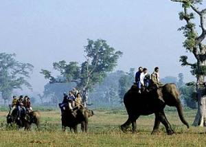 elephant-safari-kaziranga